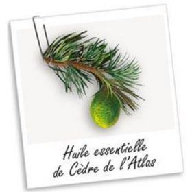 Huile Essentielle de Cèdre de l'Atlas (10ml)