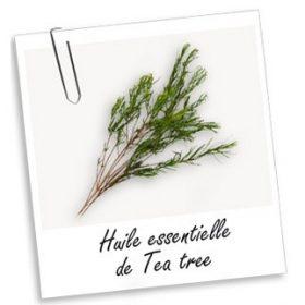 Huile Essentielle: TEA TREE (10ml)