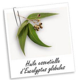Huile Essentielle 100% pure EUCALYPTUS (30ml)
